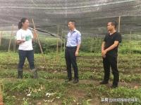 四川食用菌专家赴叙永县开展食用菌栽培技术指导和调研