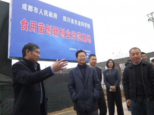 王铭晖副省长到金堂赵家镇食用菌创新创业示范基地指导调研